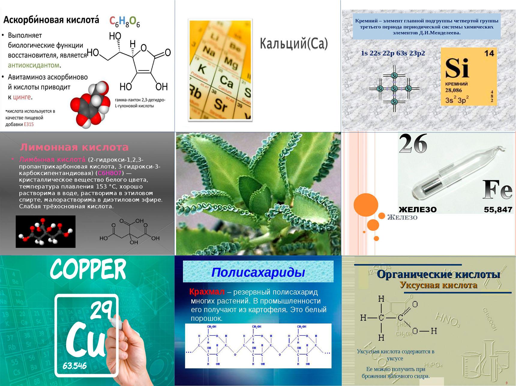 Химический состав каланхоэ