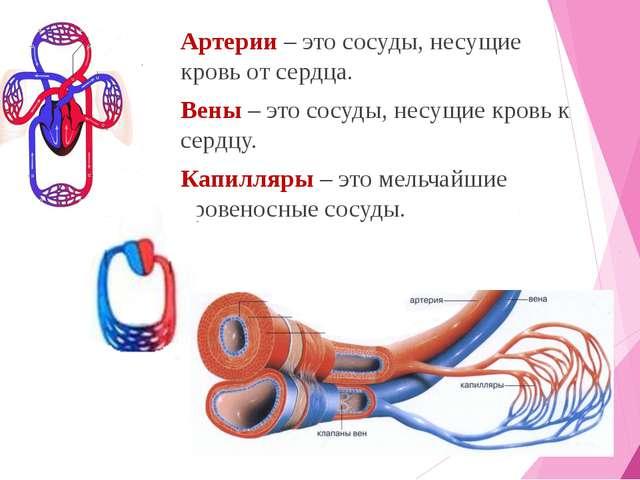 Кровь от вен и артерий