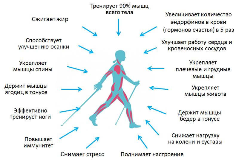 Положительные эффекты от финской ходьбы