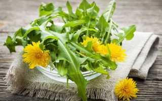Лечебные свойства одуванчика и других трав от варикоза на ногах