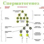 Нарушение сперматогенеза