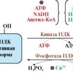 Снижения концентрации АТФ