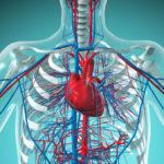 Зболевания сердечно-сосудистой и кровяной систем